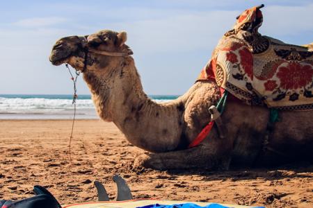 Capodanno in Marocco Agadir e tour nel deserto