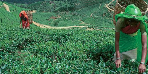 Sri Lanka tour 5 giorni da Arugam Bay